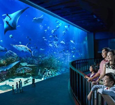 SEA Aquarium Singapore, Paket Tour ke Singapore, Paket Wisata ke Singapore Murah,