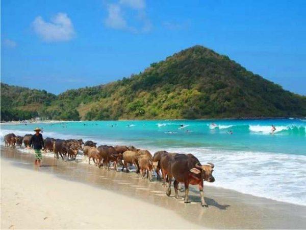 Bukit Teletubbies Pantai Seling Belanak