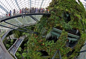 Cloud Forest Dome, Liburan Asyik Singapore di Wisata Gardens By The Bay