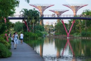 Dragonfly & Kingfisher Lakes garden by the bay