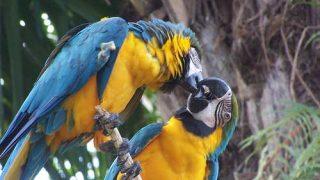 Saat di Bali Wajib Datang ke Bali Bird Park