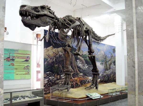 kerangka dinosaurus musium geologi