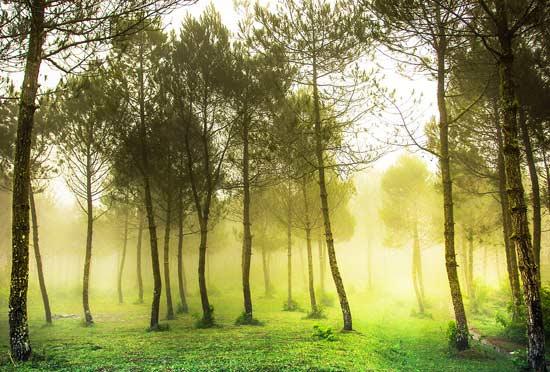 Wana Wisata Kawasan Hutan di Lembang, wisata bandung, tour bandung
