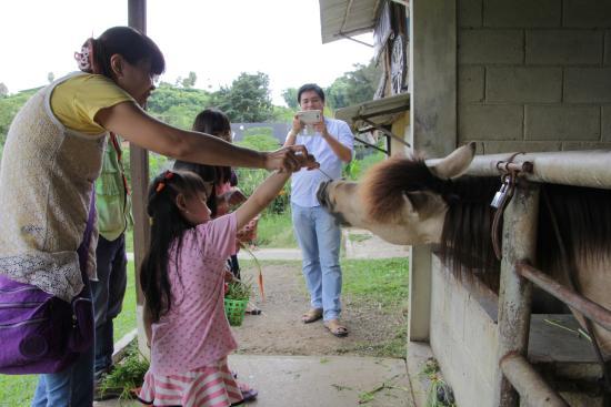 Membuka Wawasan di Jendela Alam Lembang, tour bandung, wisata bandung