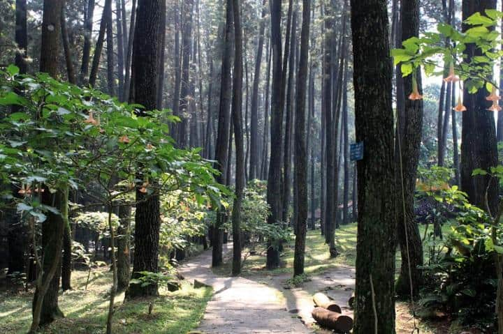 taman hutan raya ir. h djuanda, wisata bandung, tour bandung