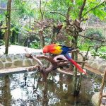 Bird Bromelia Pavilion Bandung, tour bandung, wisata bandung