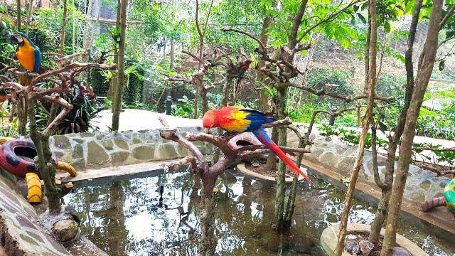 Liburan Asyik di Taman Burung Bird Bromelia Pavilion Bandung