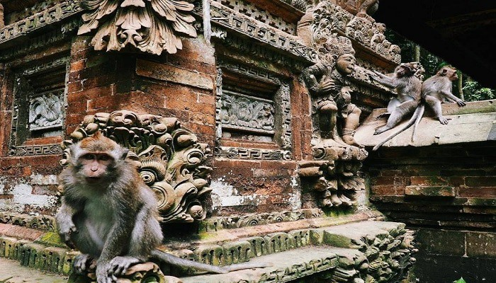 Wisata Alas Kedaton Bali, Tempat Untuk Bercengkrama Dengan Kera