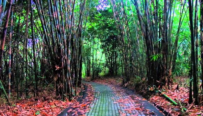 Wisata Hutan Bambu Bangli Bali, Jadi Alternatif Liburan Yang Berkesan