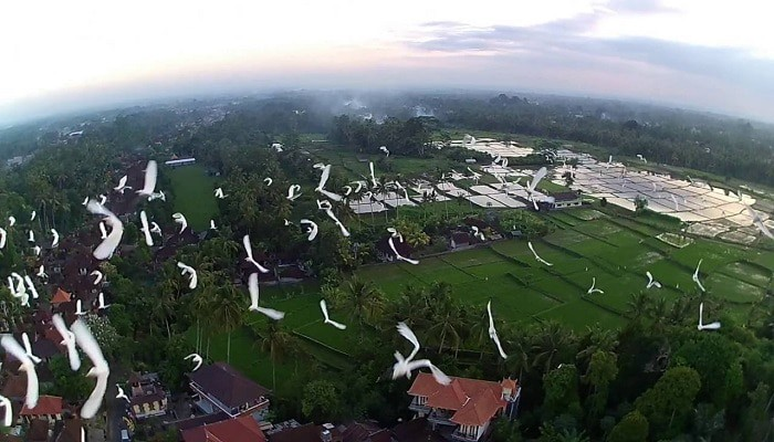 Wisata Desa Kokoan Bali