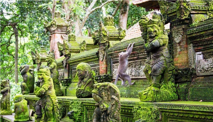 Wisata Monkey Forest Ubud Bali