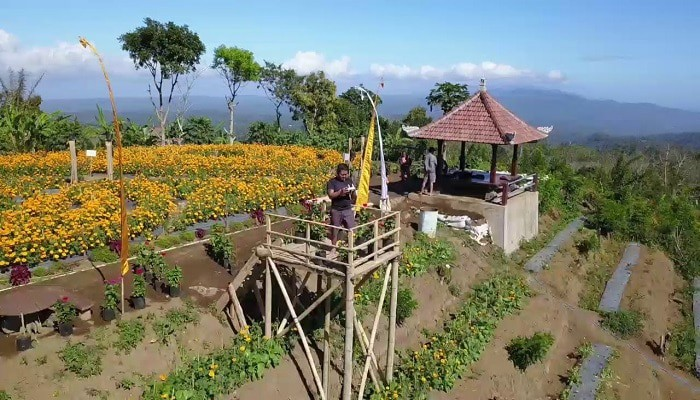 Wisata Taman Bunga Batukaru Punjungan Bali