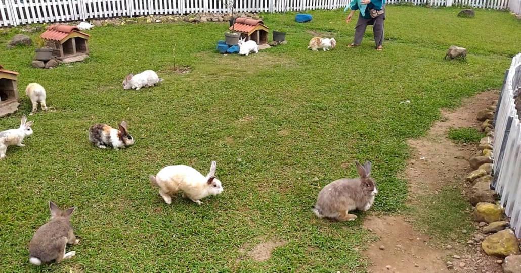 wisata taman kelinci