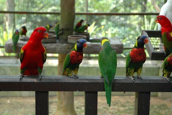 Kuala Lumpur bird park, tour malaysia, wisata malaysia murah