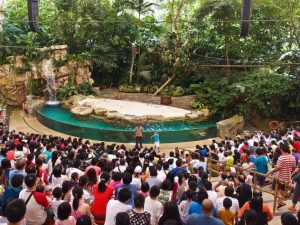 Singapore Zoo, Wisata Singapore, Rainforest Fights Back