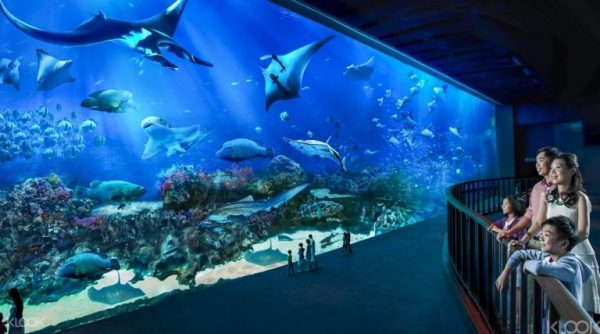 SEA Aquarium Singapore, tour singapore, wisata singapore