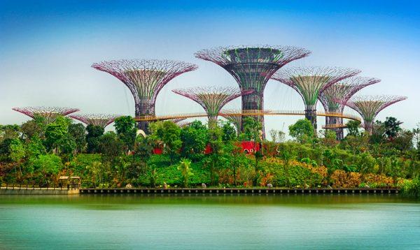 garden by the bay, tour singapore, wisata singapore
