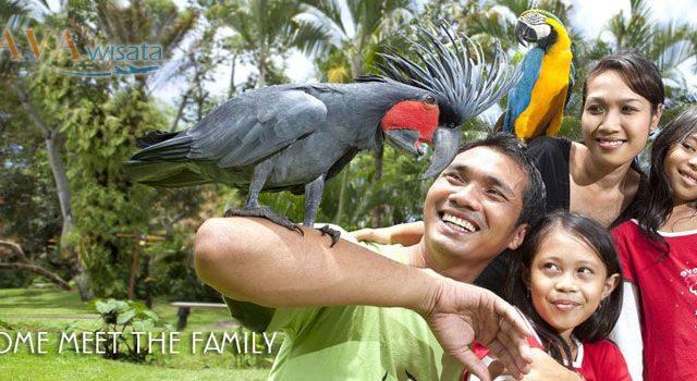 Wisata Murah ke Singapore, Tour Singapore, Jurong Bird Park