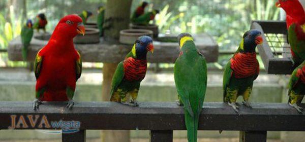 tour malaysia, wisata malaysia, birk park KL, taman burung kuala lumpur