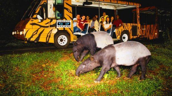night safari singapore, singapore zoo, tour singapore, wisata murah ke singapore