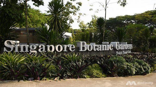 singapore botanic garden, tour singapore, tempat wisata di singapore, wisata murah ke singapore