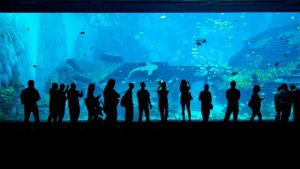 singapore sea aquarium, tour singapore, wisata murah ke singapore